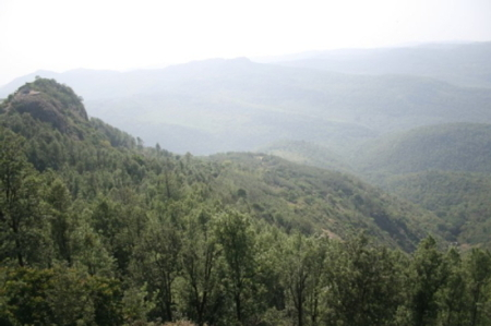 yercaud servarayan hill